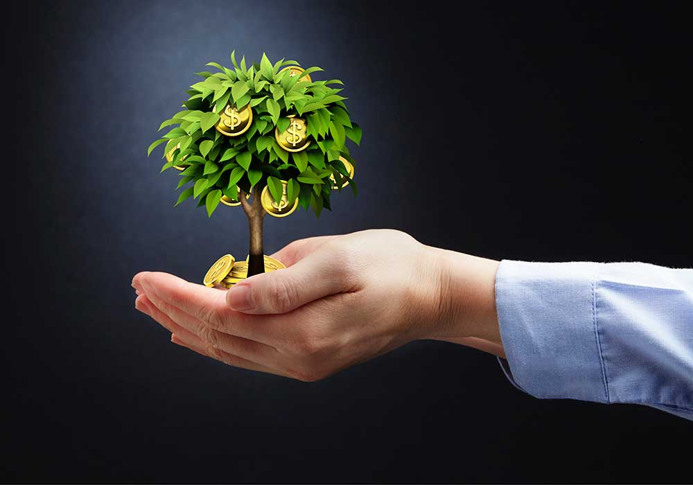 hand holding a money tree